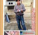 顺平县鸽会2016春季300公里比赛前三名